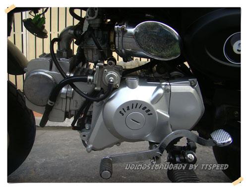 Stallions-Mini-Gio-S- (9)